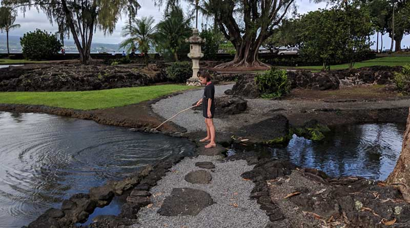 Erysse in Liliʻuokalani Park and Gardens in Hilo.