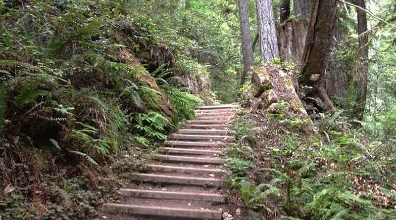 A path leads to some redwood trees in Mendocino, Calif. Nature is one of the best places to contemplate your faith.